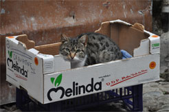 chats italie